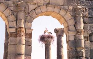 Roman Archeological site