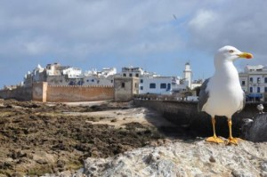 Essaouira Peacefull City