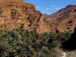 Palms Ouarzazate
